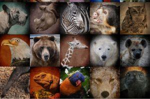 extinct creatures are in danger