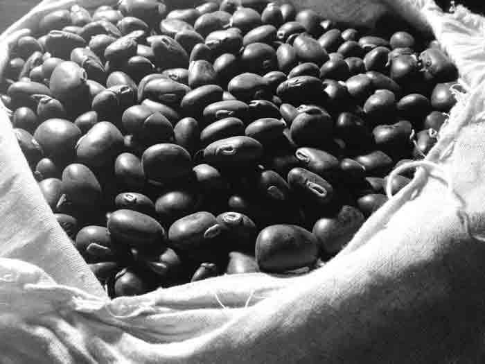 Image result for विदारीकन्द का सेवन